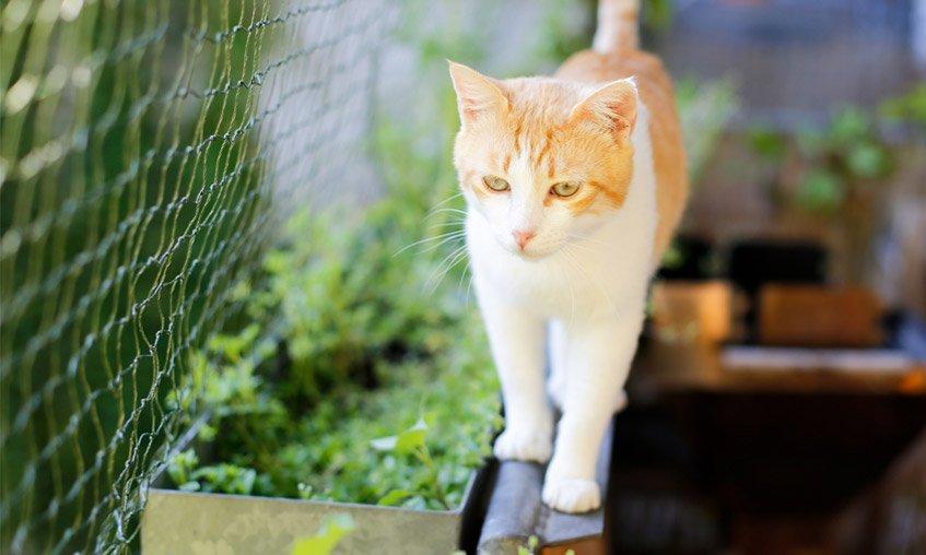 4 najważniejsze cechy dobrej siatki na kota