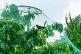 Wytrzymałe siatki ochronne na ptaki na drzewa i krzewy owocowe