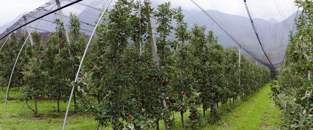Wielosezonowe siatki ochronne na drzewka i krzewy owocowe