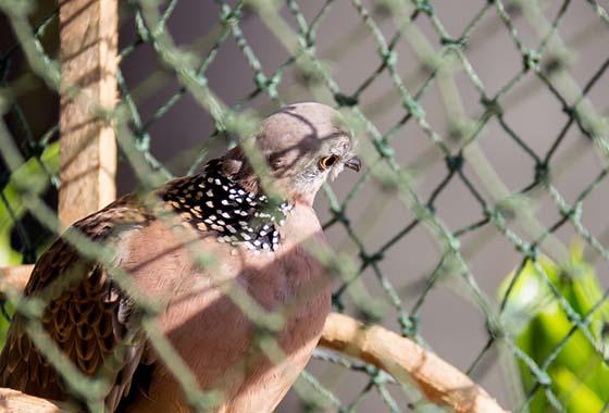 Siatki na woliery dla gołębi