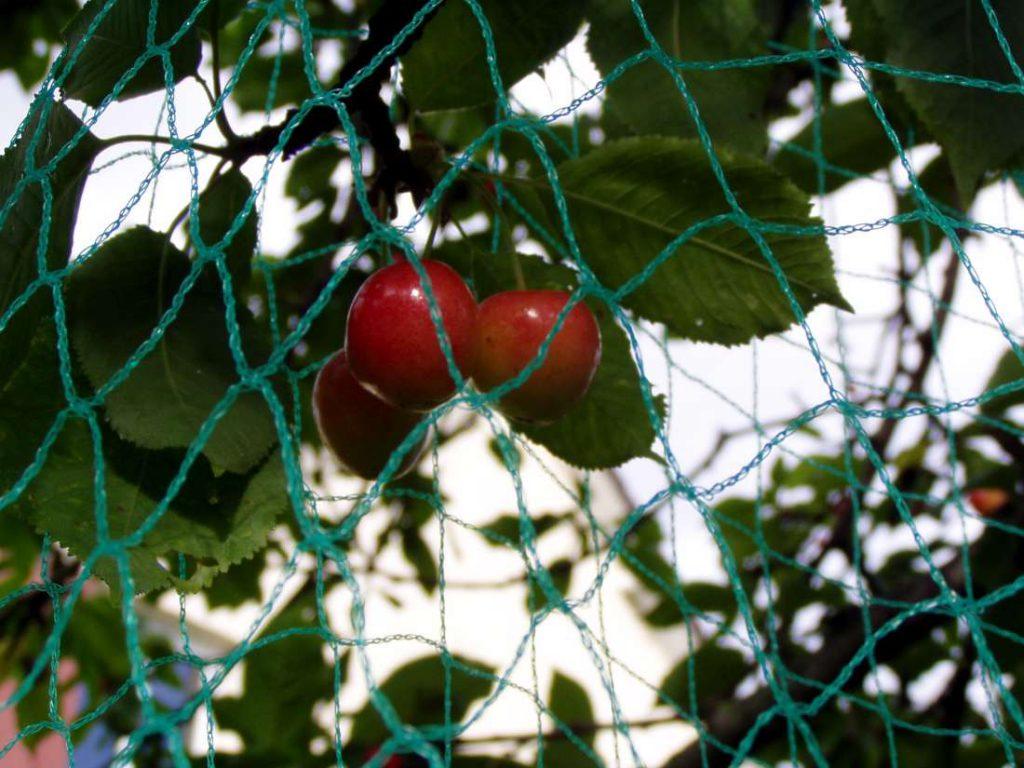 Dziane siatki ochronne na drzewka i krzewy owocowe