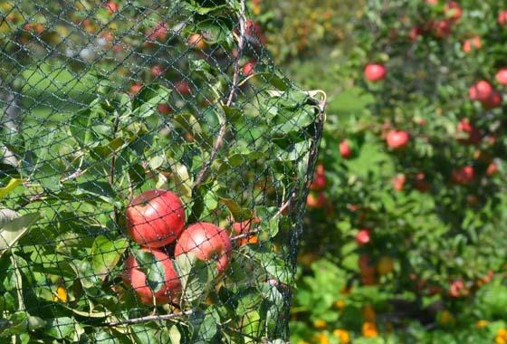 Siatki ochronne na drzewa i krzewy owocowe