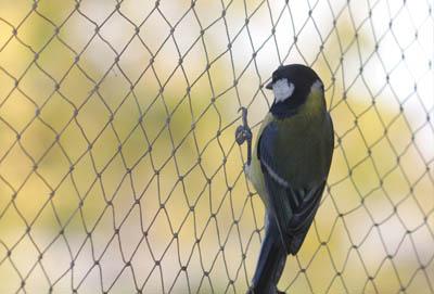 Siatka na wróble, zabezpieczająca przeciw ptakom