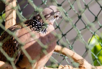 Polietylenowa, wodoodporna siatka przeciw ptakom