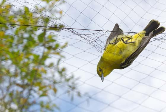 Siatki ochronne przeciw ptakom