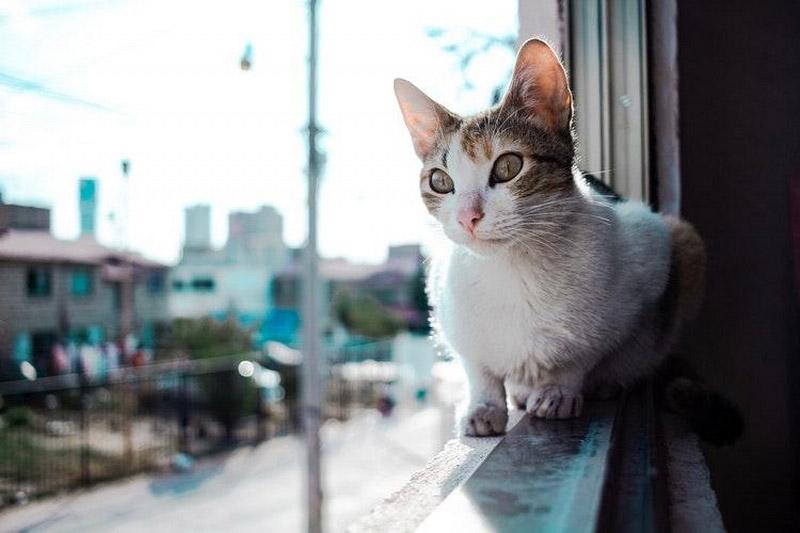 Biało-rudy kot siedzi nawąskiej ramie okna, wpatrujący się wdal, zaoknem widać ulicę orazbudynki mieszkalne.