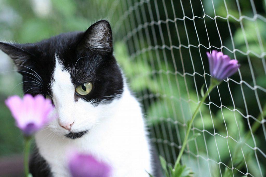 Siatka na okno dla kota - bezpieczeństwo dla Twojego pupila