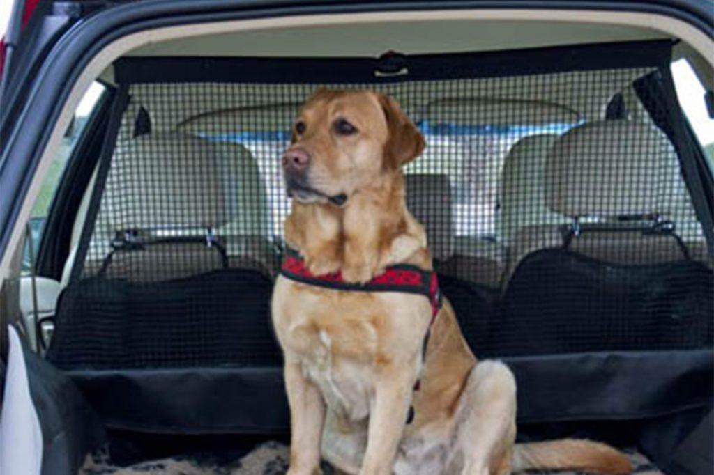 Jak przewozić psa w samochodzie, czyli wszystko o skutecznych przegrodach bagażnikowych
