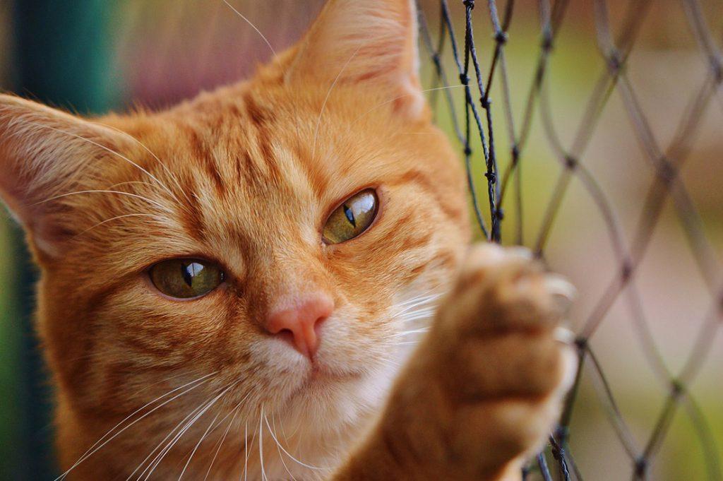 Siatka na balkon dla kota - monaż, cena, materiał