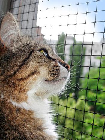 Brązowo-biały kot wyglądający przezokno chronione siatką węzłową.