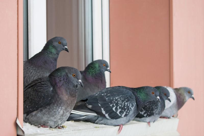 Stado gołębi siedzących naparapecie