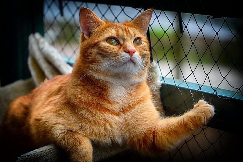 Rudy kociak wewnątrz woliery ogrodowej