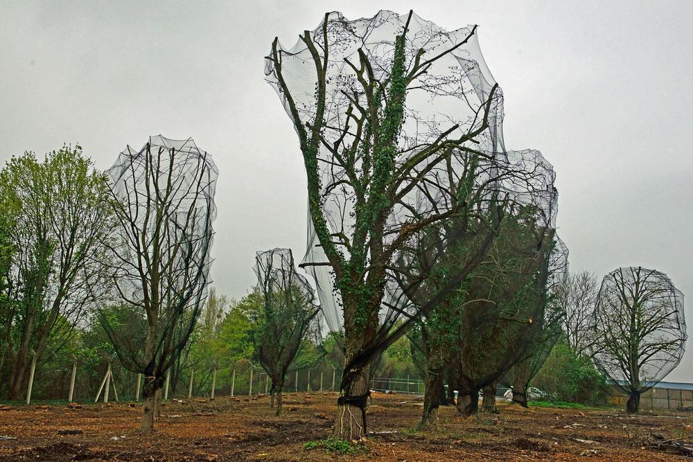 Drzewa wogrodzie okryte siatką przeciw szpakom