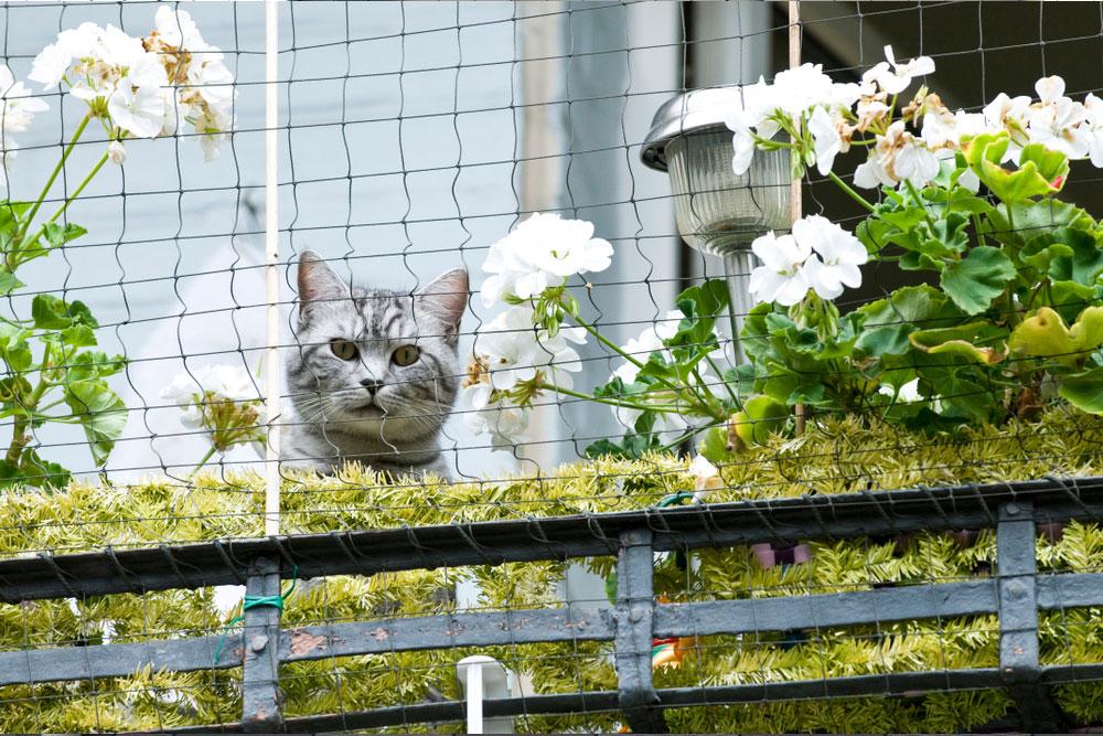 Kot wyglądający przezosiatkowany balkon, naktórymrosną białe kwiaty.