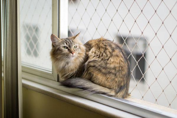 Kot leżący wosiatkowanym oknie.