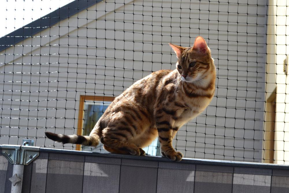 Jak Zabezpieczyć Balkon Przed Kotem Symar