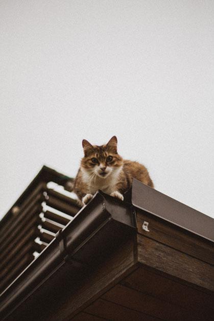 Kot siedzący naskraju dachu – nieopodal rynny.