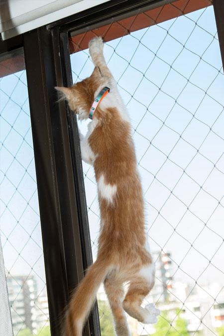Rudy kot wspina się posiatce zamontowanej wdrzwiach balkonowych.