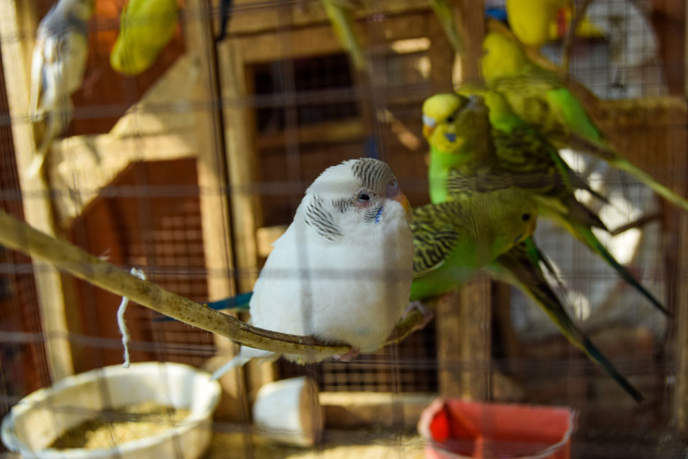 Woliera Dla Papug Jak Zbudować Komfortowe Miejsce W