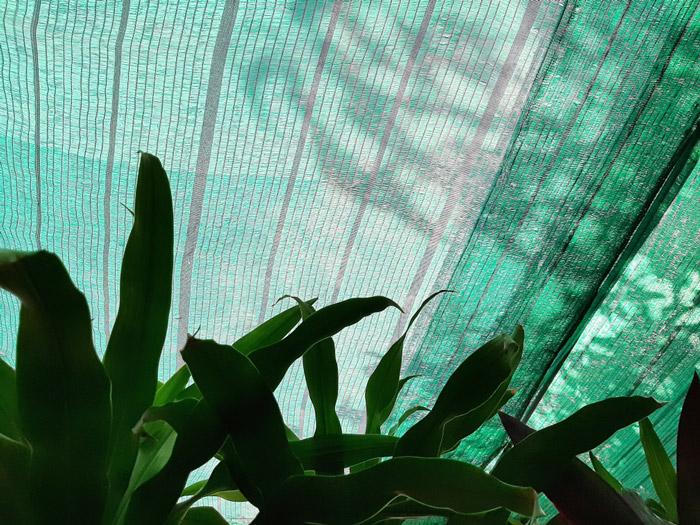 Siatka cieniująca osłaniająca rośliny