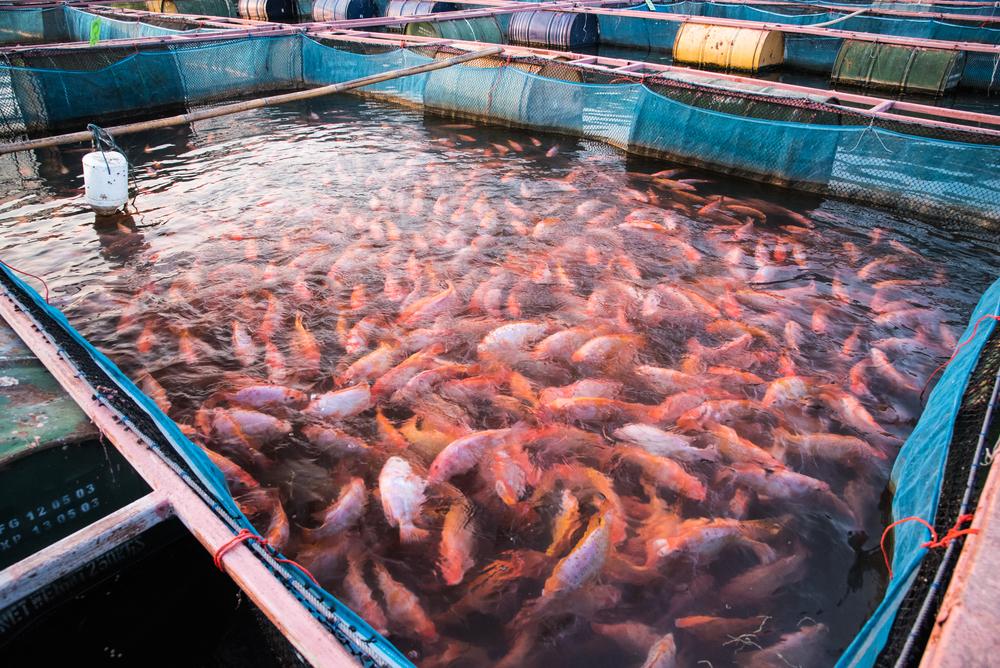 Siatki ochronne do hodowli ryb w stawach hodowlanych i gospodarstwach rybackich - Symar