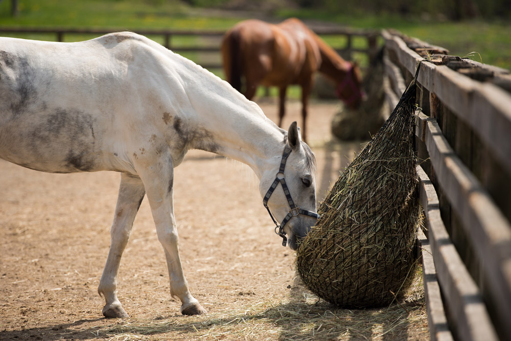Koń je siano z siatki na padoku