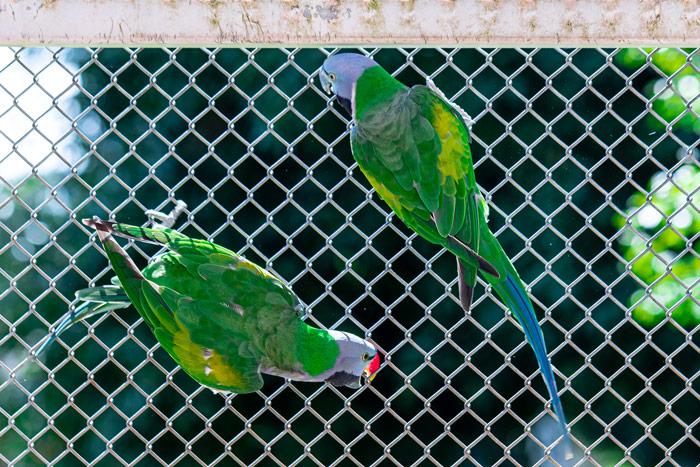 Woliera dla ptaków egzotycznych