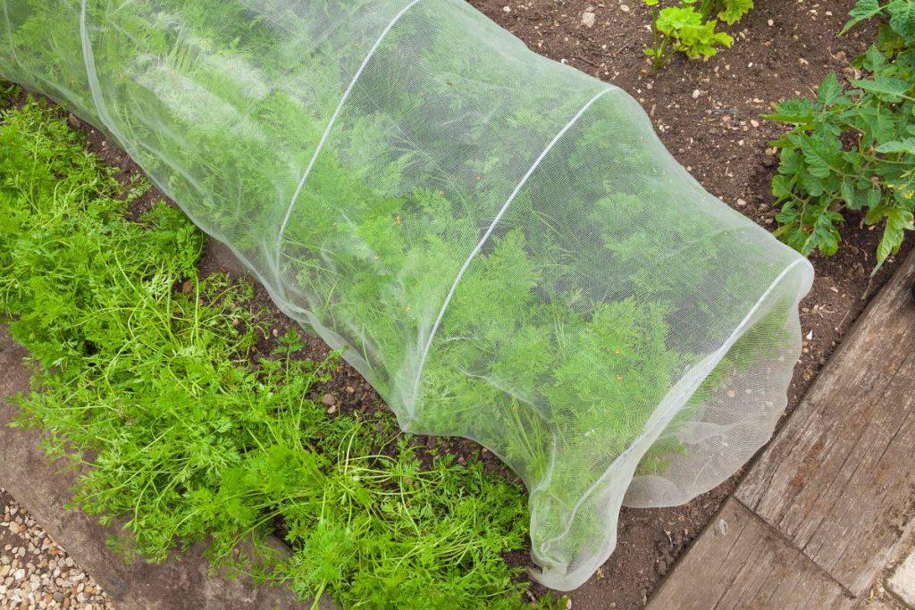 Potrzebna Ci siatka na grządki? Zobacz, jakie funkcje może pełnić oraz przy uprawie jakich roślin się przyda. To idealne rozwiązanie na mały warzywnik w ogrodzie. Kliknij!